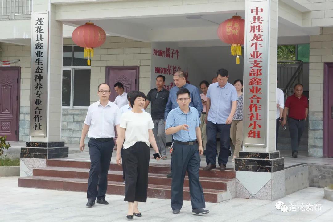 卢小青一行参观白渡村肉牛养殖产业基地2.jpg